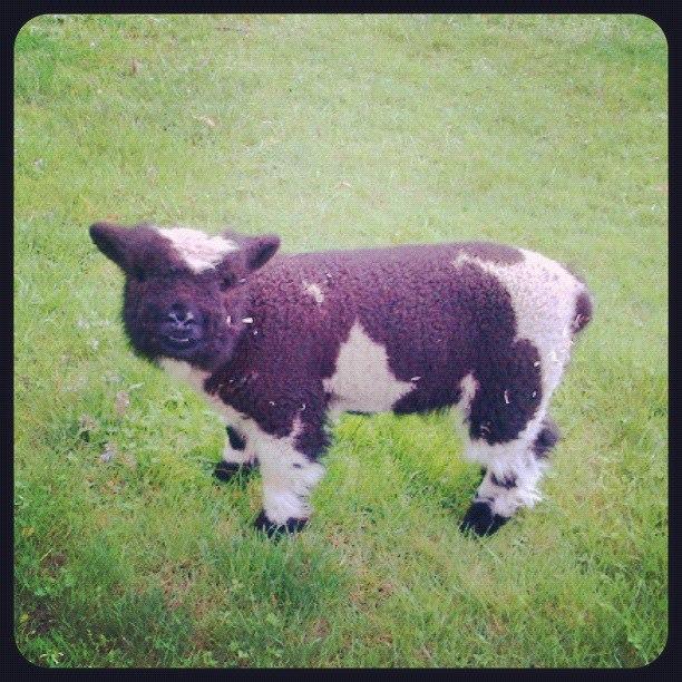 Baby Doll Bessie
