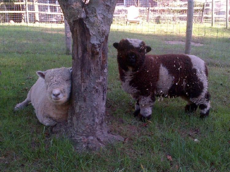 Susie & Bessie